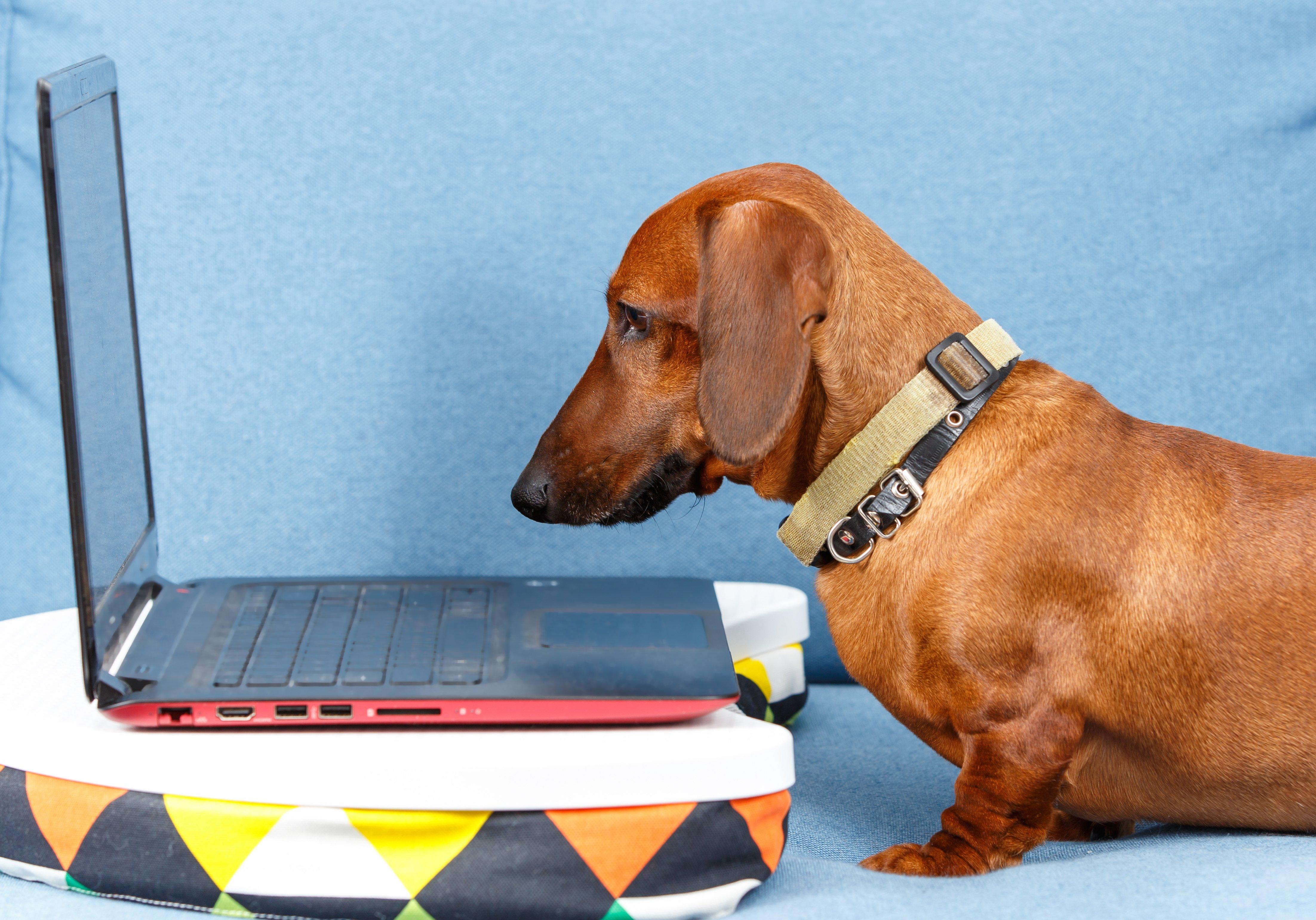 Misez sur des réseaux sociaux d'entreprise qui ont du chien !